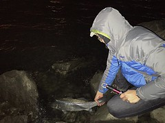 Catch & Release :-) (Kimberly C. Lee) Tags: queens eastriver astoria striper stripedbass catchandrelease winterfishing saltwaterfishing catchrelease shorefishing nycfishing