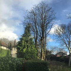 "Last reduction of the year complete 👍 working for @alski____ and firewood and chip tree surgery today! #wardenstreecare <a style=""margin-left:10px; font-size:0.8em;"" href=""http://www.flickr.com/photos/137723818@N08/23944016555/"" target=""_blank"">@flickr</a>"