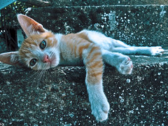 Cats Edition 8 - (22) (Robert Krstevski) Tags: robertkrstevskiblogspotcom robertkrstevski cat pet pets animal animals animallovers animalslove lovely filter filters color colors kitty kitten kittens kitties cute cuteness gato gatos popular macedonia catsedition8 lachatte chatte
