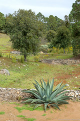 29. Cofre de Perote, Veracruz, Mexico-21.jpg (gaillard.galopere) Tags: continentsetpays iptcnewscodes motsclsgnriques travel adjectif 15000000 2016 5d apn america amrique animaux campamiento cofredeperote couleur golfine iptcsubjects mex mx markiii mexico mexique mkiii outdoor pacific playa puertoarista sport tortugas traveling vegetations veracruz volcan voyage agave altitude arena canon color colorful discover elevation eos extrieur green light longlense ocean outdoorphotography paysage protection reptile roadtrip sable sand verde vert volcanes volcano