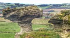 The Bunnet Stane (kevinmcnair) Tags: scotland kinross thebunnetstane bunnetstane gateside westlomond lomondhills fife calciferoussandstone sandstone maidensbower mushroom weathering scottishfolklore scottishwalks erosion geology bonnetstone