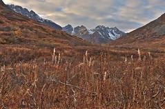 The Green Is Gone (jack4pics) Tags: alaska fall brush earthtones hatcherspass