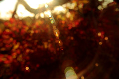 Alignment of the Autumn Planets (y_egan) Tags: closeupmacrolens bokeh blur outoffocus landscape abstract light autumn fall mountain palmerpark coloradosprings canoneos yoshikoegan lensflares nature trees