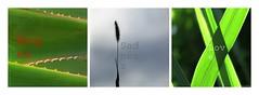 Feelings (nathaliedunaigre) Tags: montage collage combinaison nature association mots words sentiments feelings motions work plantes carr square emotions travailphotographique triptyque
