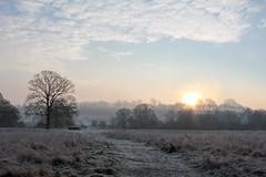 January sunrise (Nikki Goldblatt) Tags: lincoln trees frosty southcommon landscape winter skies nature mist lincolnshire sunrise sky clouds