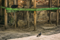 Breakfast time. (Tomasz Aulich) Tags: breakfast hunting building architecture urban city old brick cats bird light sunlight vintage oldschool blackcat nikon sigma d poland travel green red animal