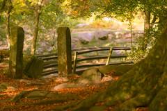 Autumn Light (RD400e) Tags: canon eos 5d mk3 ef 85mm f12 gitzo bwpolariser padley gorge peakdistrictnationalpark peakdistrict trees woods autumn dof outdoors