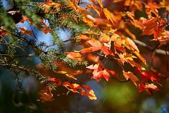 _DSC2512 (BrettGV) Tags: autumn sonnart18135