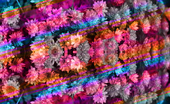 fold here (dominicotine) Tags: abstract art blend bright colors flowers symmetrical