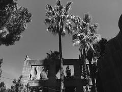 (electricgecko) Tags: architecture barcelona ricardobofill concrete palm tree palms monochrome darktropics