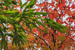 The Clash (NVOXVII) Tags: autumn vibrant colours trees leaves clash orange green mixture abstract arty nikon hampshire nature stunning fall d3200 gardens