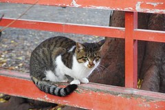 Today's Cat@2016-11-09 (masatsu) Tags: cat thebiggestgroupwithonlycats catspotting pentax mx1