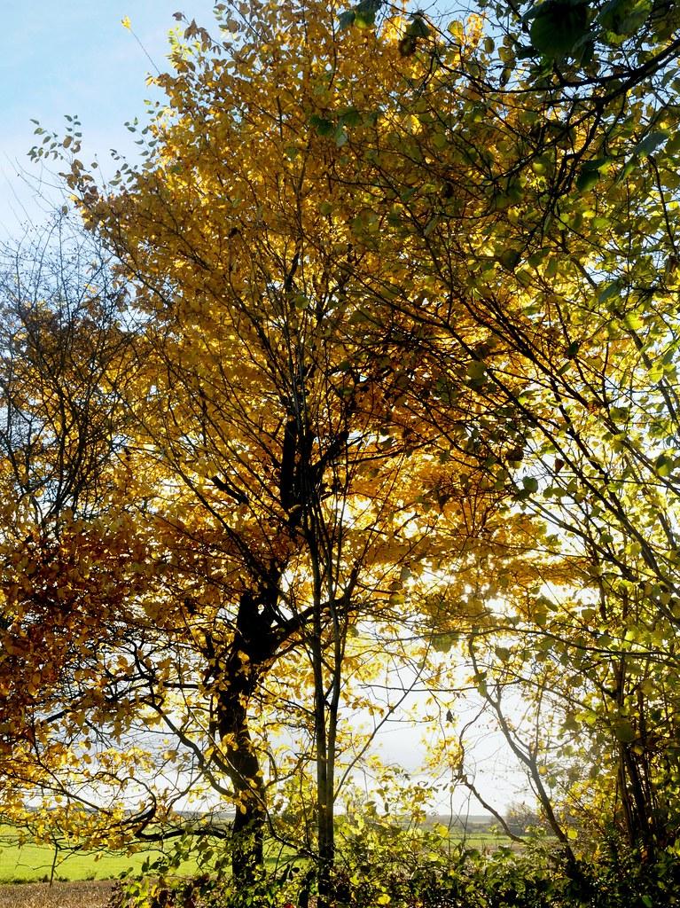 The World S Best Photos Of Eiche And Gegenlicht Flickr Hive Mind
