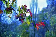 Automne au Lapig (djimbi29) Tags: apn apnnikond90 landivisiau29 nature arbre feuillage natureaménagée parc lapighaut retouché retouchéappareil branchage traitementnefnikon bokhey