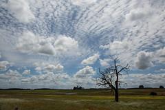 hard to find (Keith Midson) Tags: tree tasmania lonetree cressy sky cloud farm farming rural australia