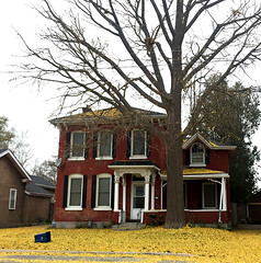 Ginkgo Dropped Its Leaves (glantine) Tags: brantford fall automne feuilles leaves ginkgo gnreux gold or arbre tree house maison deciduous somptueux tapis