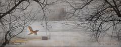 """La chaîse oubliée ... ( P-A) Tags: lapêche wakefield auquébec rivièregatineau gel neige brouillard automne quai chaise nature forest parcdelagatineau photos simpa© texture """"nikonflickraward"""""""