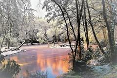 Frozen sunset (artanglerPD) Tags: snowaden ice frozen lake aden sunset reflectionstrees trees island