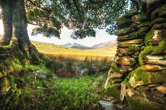 Green green grass of home. X (Einir Wyn) Tags: landscape green grass home snowdonia snowdonianationalpark silence tree oak derelict drystonewall moss mountains hills valley wales uk britain love outbuilding outdoor beauty
