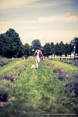 Bleu lavande  ! (j0esam1) Tags: portrait dog chien flower nature fleur field fleurs women purple femme westie lavander mauve lavande arbre champ selfie lifetime pourpre