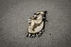 Auswahl-5426 (wolfgangp_vienna) Tags: old beach strand thailand island asia asien alt insel ko flotsam trat kut treibgut kood aophrao kokood schwemmgut kokut kohkut thesunshineresort