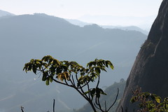 rvore no Pedro (Vinicius Montgomery) Tags: montgomery vincius prof montanhas pedro