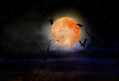 If you're living in a big city, and if 18 years is too long for you, just create your own Super Moon !!! (Pifou 2010) Tags: trees light moon paris france art home colors night lune pond lumire couleurs super arbres crows nuit etang 2015 corbeaux pifou2010 grardbeaulieu ifyourelivinginabigcityandif18yearsistoolongforyoujustcreateyourownsupermoon