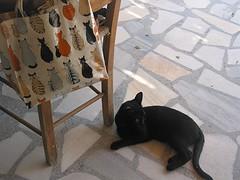 in cerca di a...micizia!!!! (guendaeio (orasoloio)) Tags: cat greece grecia gatto ellas canonpowershotg2 gattonero