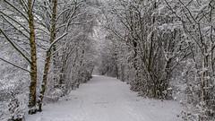 Winter weather 2010 - Steinse groen - omgeving Haastrecht (Frans Berkelaar) Tags: nederland nl winterweather zuidholland haastrecht winter2010 steinsegroen polderstein gemeentekrimpenerwaard