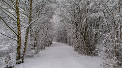 Winter weather 2010 - Steinse groen - omgeving Haastrecht (F. Berkelaar) Tags: nederland nl winterweather zuidholland haastrecht winter2010 steinsegroen polderstein gemeentekrimpenerwaard