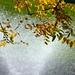 A splash of Autumn