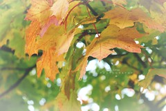 Herbstzeit (Derya Elmas) Tags: autumn red orange green nature beautiful leaves yellow photography fotografie colourful baum leav herbstzeit canoneos70d