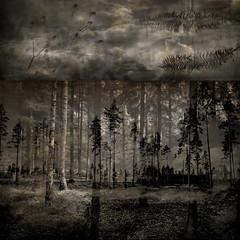 gedankenheimat IV (titustid) Tags: blackandwhite home pine forest blackwhite sweden surrealism surreal thoughts pines dreams spiritual fragment gedanken dreamedstories