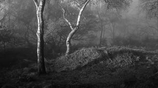 Bole Hill