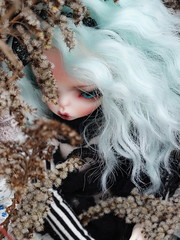 (Nirmrill) Tags: autumn dolls bjd samantha dollzone