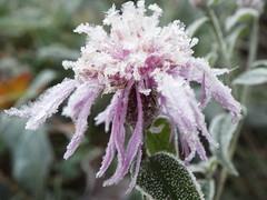 brrr (fabri38) Tags: macro colore natura bologna fujifilm fiore inverno bosco mattino cristalli