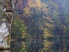 _B016505 Gate of Foliage (idunavision) Tags: leica morning autumn trees light fall mamiya nature water colors zeiss reflections germany pond rocks wasser herbst natur olympus nrw teich bäume beech farben felsen detmold buchen spiegelungen morgenlicht ostwestfalenlippe hornbadmeinberg externstine