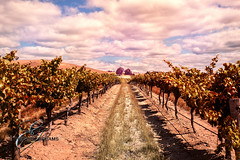 vine-plantation.jpg (evgeny.rusky) Tags: nature clouds country vine hills plantation grapes holliday horticulture