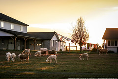 samsebeskazal.livejournal.com-0470.jpg (samsebeskazal) Tags: pennsylvania farm amish lancaster lancastercounty buggy pennsylvaniadutch