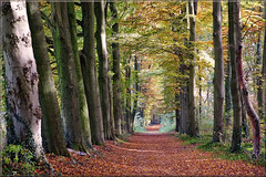 Forest path in autumn (Foto Martien) Tags: road park wood autumn mist holland color colour fall netherlands dutch fog forest way estate path colorfull fallcolors sony arnhem herfst foggy pad nederland autumncolors bos geotag autumnal couleur veluwe herfstkleuren renkum roadway kleurrijk dutchlandscape a77 mistig oosterbeek gelderland kleur 70300 geotagging woud bont najaar veelkleurig landgoed kleurig mariëndaal gelderslandschap nederlandslandschap forestlandscape boslandschap woodedlandscape martienuiterweerd fotomartien sonyslta77v sonyalpha77 geotaggedwithgps tamron70300mmf456sp gelderschlandschapkasteelen