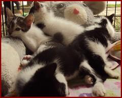 Y todos reunidos (terryisaza) Tags: fotografia felinos cats cariosos colombia gatos gata muecos cachorros