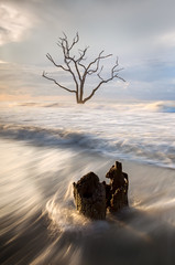 Constant Struggle....  Botany Bay, Edisto Island, South Carolina (jason_frye) Tags: liveoak edistoisland southcarolina discoversc botanybay tree ocean wave