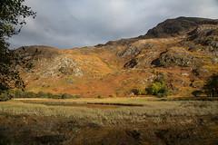 Autumn in Glen Shiel (Sunshinenshadows) Tags: autumncolours mountains trees glensheil scotland westcoast october rusts greensyellows brown