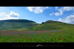 Landscape of Castelluccio_3722 (c) Tags: appenninocentrale appennini sibillini castelluccio pianograndedicastelluccio fiorituracastelluccio umbria nikond90 montagna nuvole