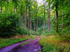Testdorfer Wald (Sophia-Fatima) Tags: testdorferwaldnaturschutzgebiet zwischenzarrentin testdorf kleinzecher mecklenburgvorpommern deutschland buchen buchenwald naturschutzgebiet