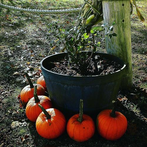 Autumn, oh the colors! :) #newengland #falldecor #natureshots #loveyourself #paradise #park #sunshineday #explore #pumpkinpatch
