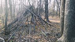 20161106POTD (Plonq) Tags: 2016yip sticks woods trees park assiniboinepark winnipeg manitoba canada