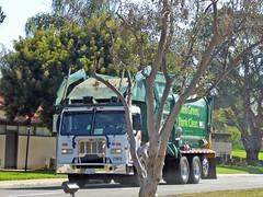 WM Garbage Truck 10-14-16 (Photo Nut 2011) Tags: sanitation california wastedisposal truck garbage trash waste junk garbagetruck trashtruck refuse wastemanagement wm 211922