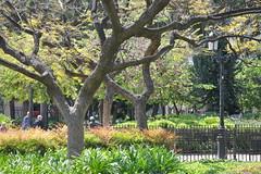 HFF Old People; Old Trees; Old Fence (Omunene) Tags: fence fencefriday park urbanpark parkinacity trees lamppost lasagradafamilia spain barcelona antonigaud espaa catalua catalonia