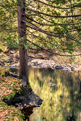 2016-10-14_8570.jpg (flyfast 70) Tags: cascades eau nature water feuillage automne fall rivire photographie trees foto fort river forest photography lake colors couleurs chte madeleinepunde stcme arbres stcme chte fort rivire madeleinepunde
